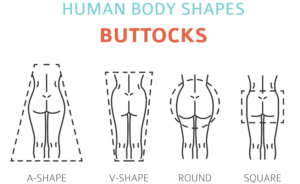 Buttock shapes